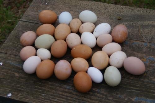 eggs,eggs,eggs