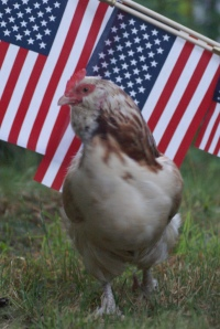flag and chicken