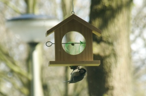Birdfeeder with great tit