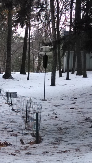 A neighbor's feeder