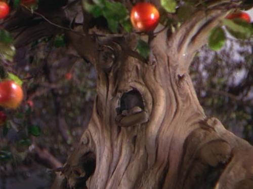 oz tree